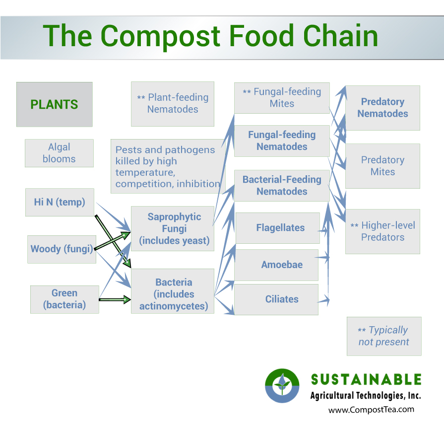 Compost Food Chain